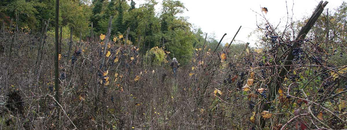 Vigna di Gabbiano nel dicembre 2016
