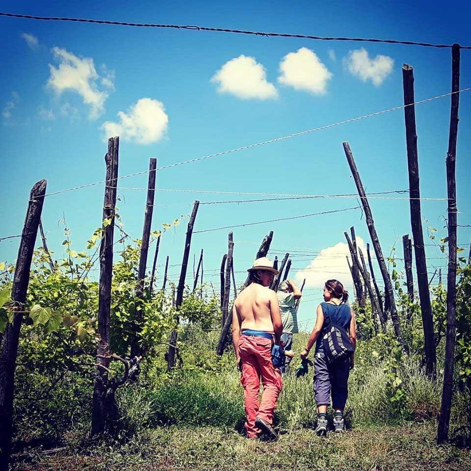Tra le vecchie vigne
